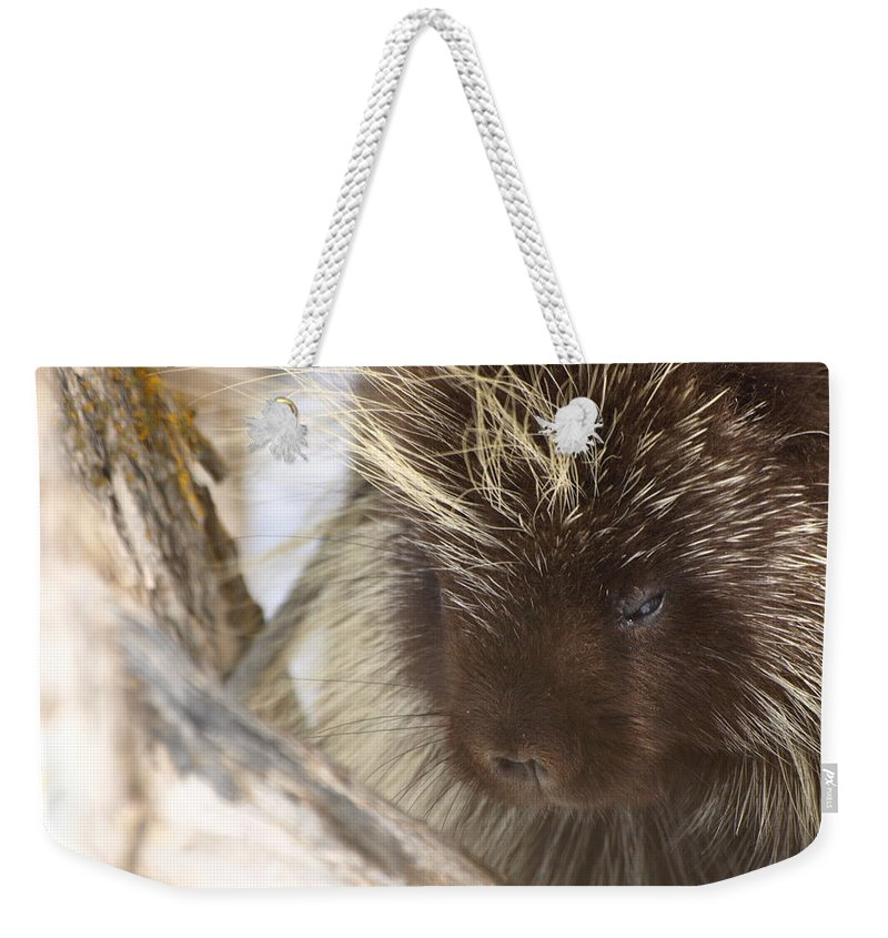Porcupine Weekender Tote Bag featuring the photograph As Soft As A Pincushion by DeeLon Merritt