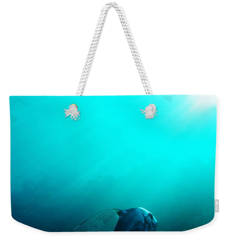 Pompano Weekender Tote Bag featuring the photograph Ascension by Mumbles and Grumbles