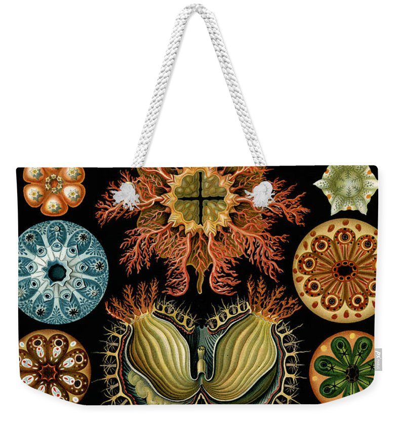 Arthropods Weekender Tote Bags