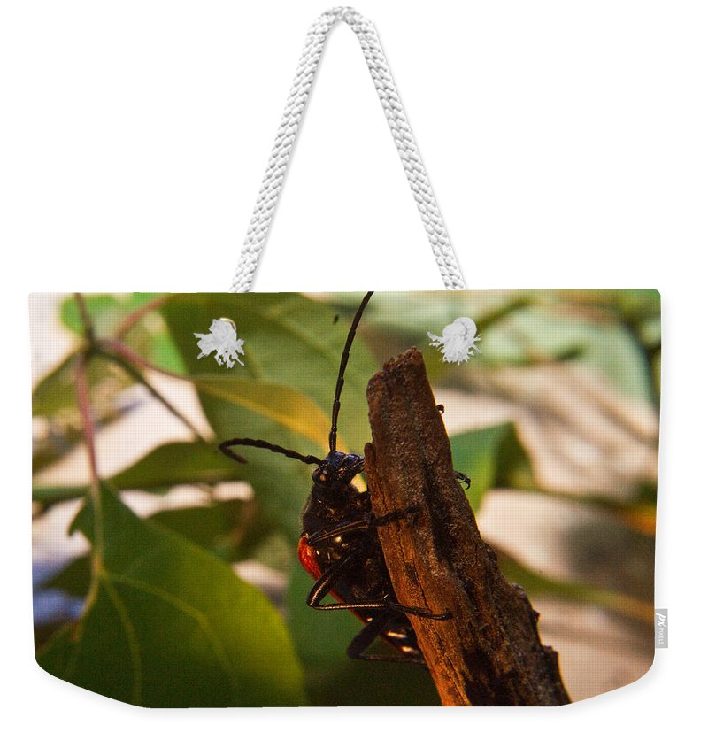 Beetle Weekender Tote Bag featuring the photograph Asending Beetle by Douglas Barnett