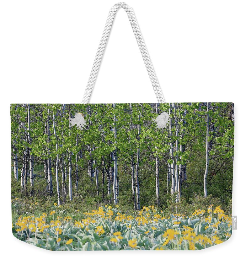 Aspen Trees Weekender Tote Bag featuring the photograph Aspen And Balsam Root by Darrel Giesbrecht