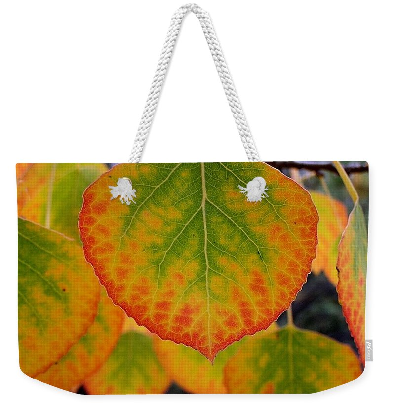 Aspen Weekender Tote Bag featuring the photograph Aspen Color by Carol Milisen