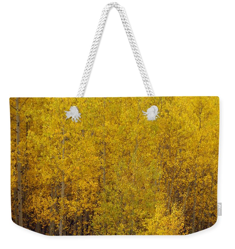 Fall Colors Weekender Tote Bag featuring the photograph Aspen Fall 2 by Marty Koch