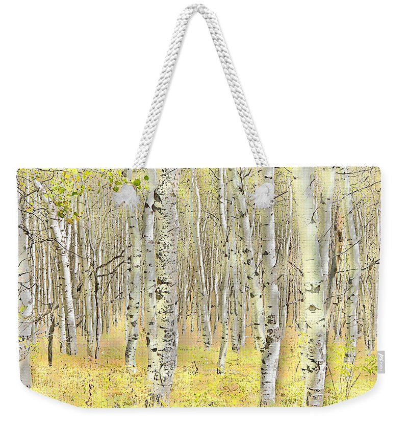 Aspen Weekender Tote Bag featuring the photograph Aspen Forest 2 - Photo Painting by Steve Ohlsen