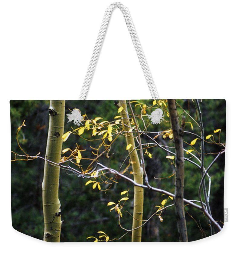 Aspen Weekender Tote Bag featuring the photograph Aspen Grove by Jerry McElroy