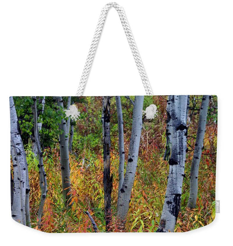 Grand Teton National Park Weekender Tote Bag featuring the photograph Aspen In Fall by Marty Koch
