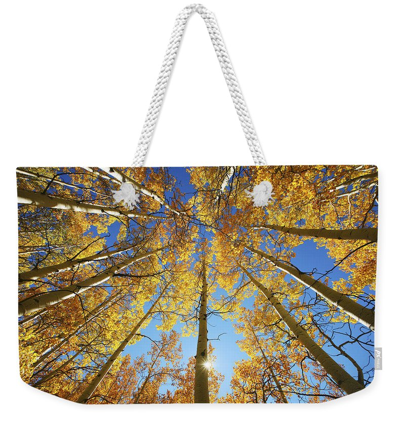 Aspen Weekender Tote Bag featuring the photograph Aspen Tree Canopy 2 by Ron Dahlquist - Printscapes