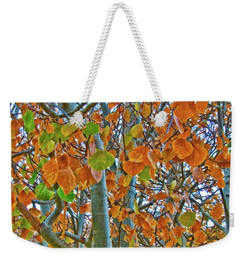 Aspen Trees Weekender Tote Bag featuring the photograph Aspen Trees by Mae Wertz