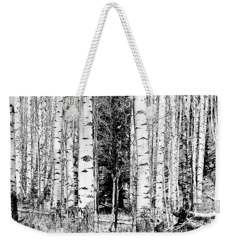 Black And White Weekender Tote Bag featuring the photograph Aspens And The Pine Black And White Fine Art Print by James BO Insogna