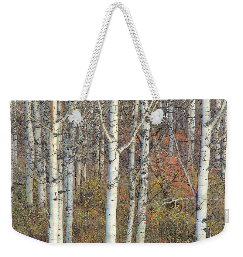 Aspens Weekender Tote Bag featuring the photograph Aspens At Dusk by Darrel Giesbrecht