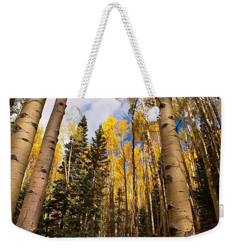 Aspens Weekender Tote Bag featuring the photograph Aspens In Santa Fe 3 by James Gay