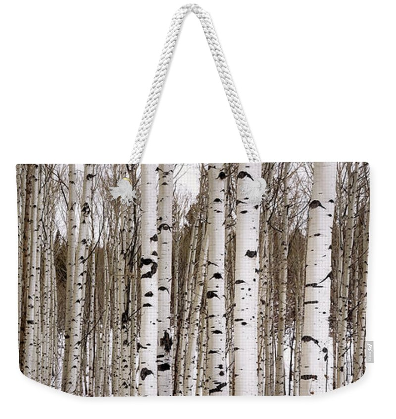 Aspen Weekender Tote Bag featuring the photograph Aspens In Winter Panorama - Colorado by Brian Harig