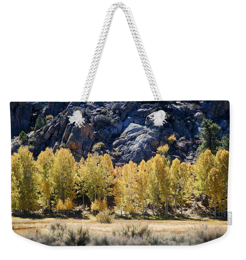 Aspens Weekender Tote Bag featuring the photograph Aspens by Kelley King