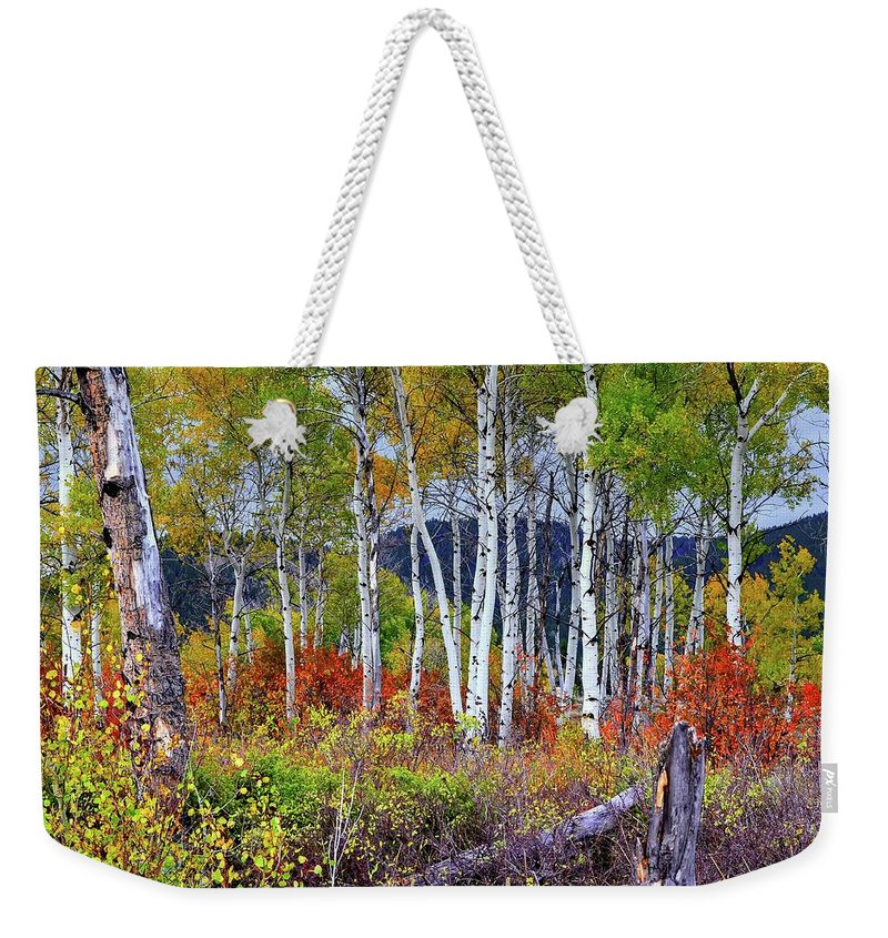 Landscape Weekender Tote Bag featuring the photograph Aspens Meet Autumn by Michael Morse