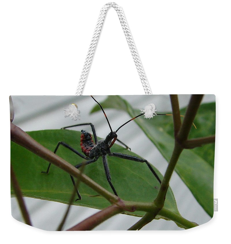 Insect Red Black Green Leaf Weekender Tote Bag featuring the photograph Assassin Bug by Luciana Seymour