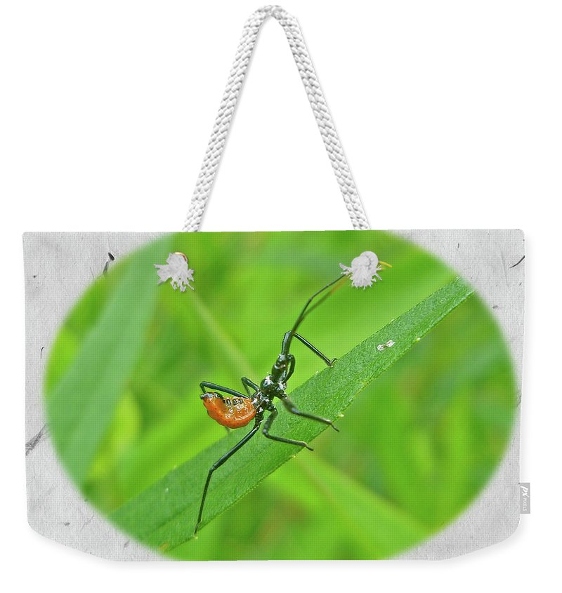 Assassin Weekender Tote Bag featuring the photograph Assassin Bug Nymph - Reduviidae by Mother Nature
