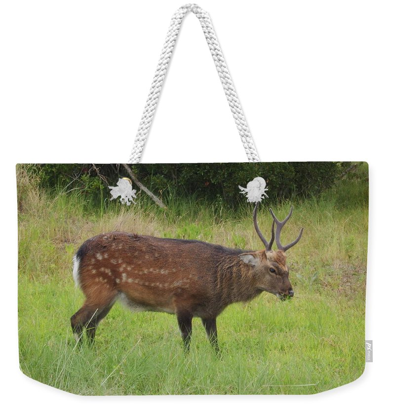 Assateague Island Sitka Deer Images Sitka Deer Prints Assateague Island Prints Assateague Island Wildlife Introduced Species Weekender Tote Bag featuring the photograph Assateague Sitka Deer by Joshua Bales
