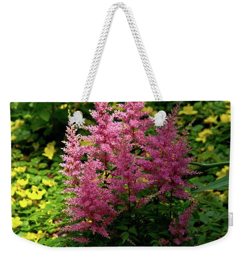 Astillbe Weekender Tote Bag featuring the photograph Astillbe In Light And Shadow by Douglas Barnett