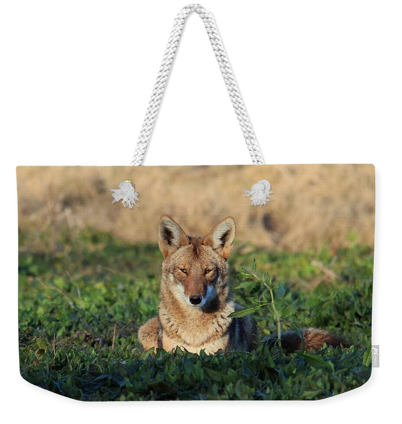 Coyote Weekender Tote Bag featuring the photograph At Peace by Matt Blankenship