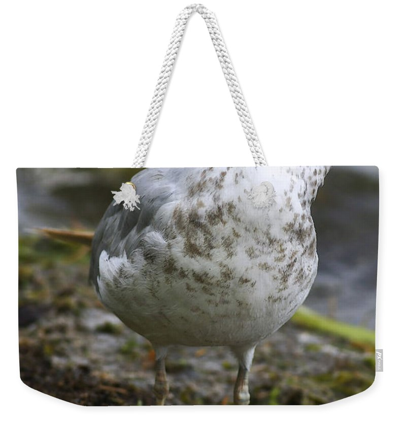 Bird Weekender Tote Bag featuring the photograph At The Beach by Deborah Benoit