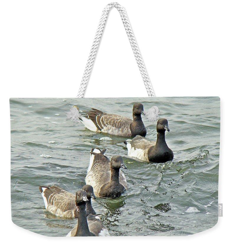 Geese Weekender Tote Bag featuring the photograph Atlantic Brant Geese - Branta Bernicla Hrota by Mother Nature