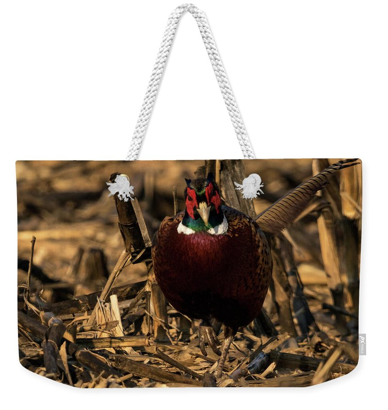 Ring-necked Pheasant Weekender Tote Bag featuring the photograph Attack Mode by Travis Boyd
