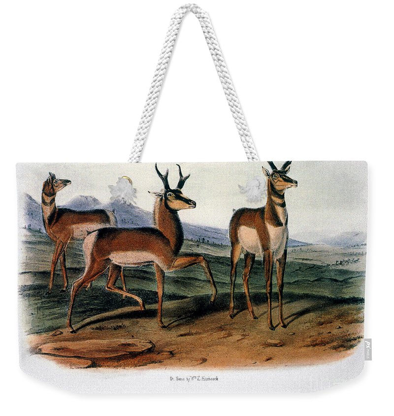 1846 Weekender Tote Bag featuring the photograph Audubon: Antelope, 1846 by Granger