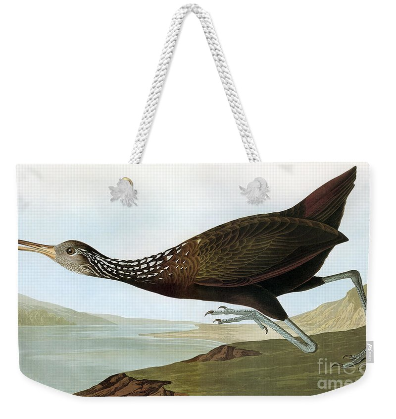 19th Century Weekender Tote Bag featuring the photograph Audubon: Limpkin by Granger