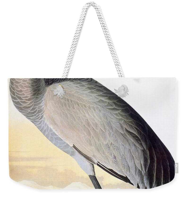 1827 Weekender Tote Bag featuring the photograph Audubon Sandhill Crane by John James Audubon