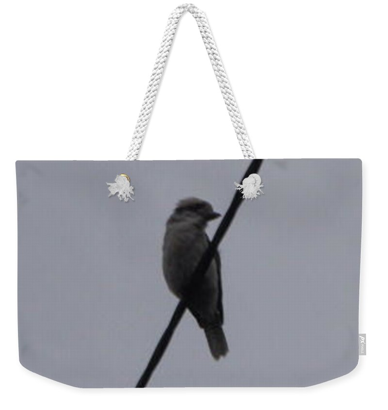 Weekender Tote Bag featuring the photograph Australian Native Animals by Peter Halmos