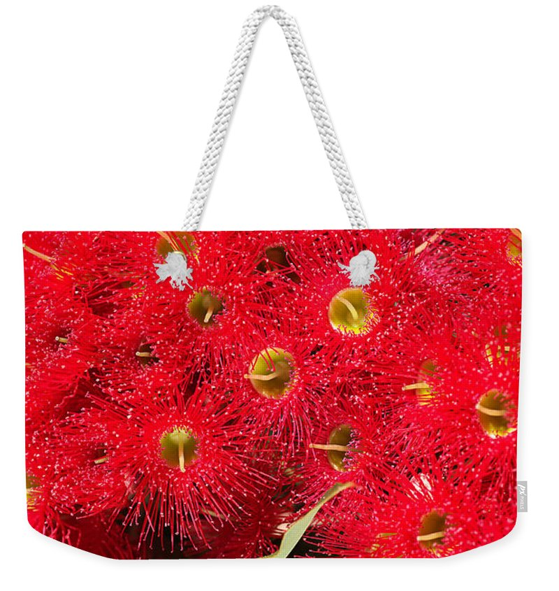 Joy Watson Weekender Tote Bag featuring the photograph Australian Native Eucalyptus Flowers by Joy Watson