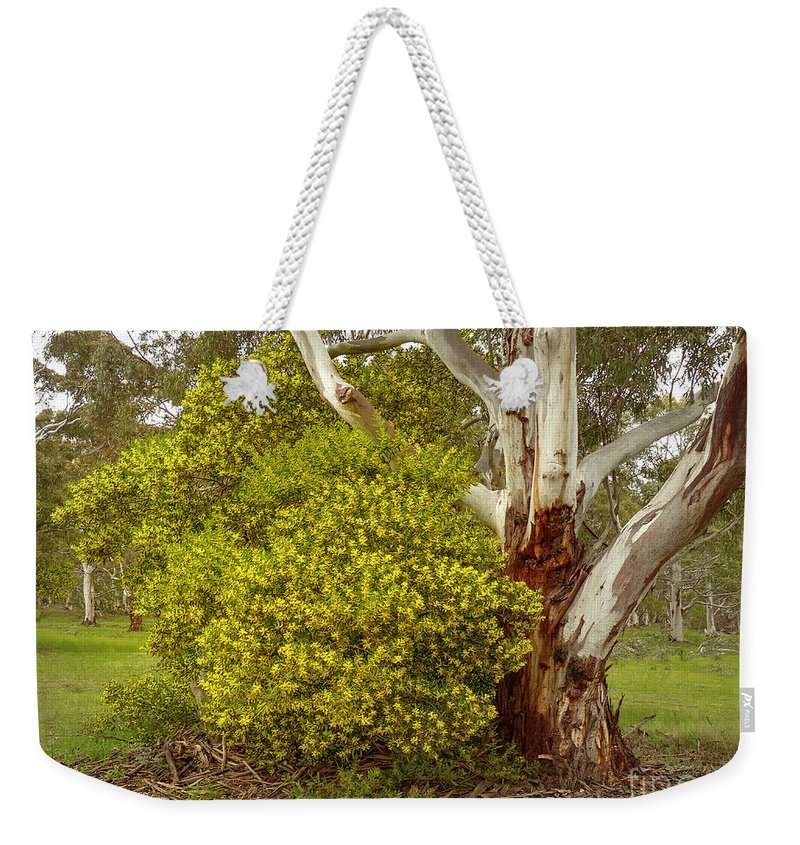 Australian Wattles Bush And Candlebark Gum Tree Weekender Tote Bag featuring the photograph Australian Wattles Bush And Candlebark Gum Tree by Teresa A and Preston S Cole Photography