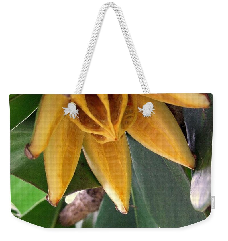 Autograph Tree Weekender Tote Bag featuring the photograph Autograph Tree Seed Pod by Mary Deal