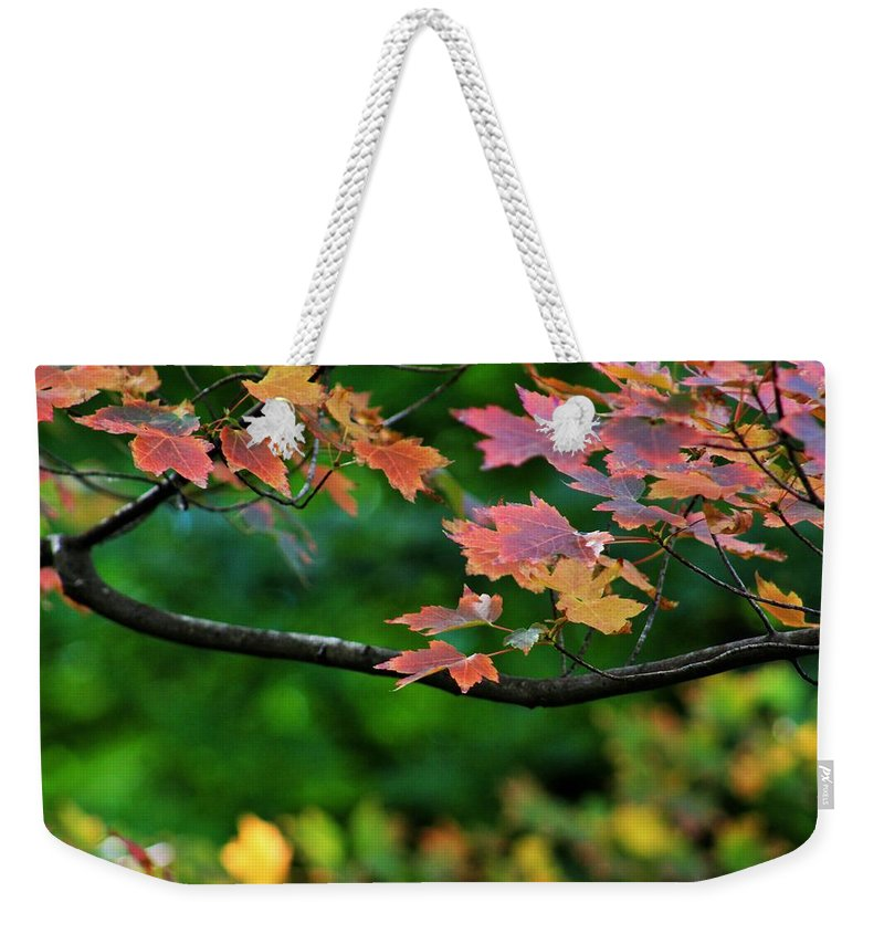 Autumn Weekender Tote Bag featuring the photograph Autumn Along The Branch by LKB Art and Photography
