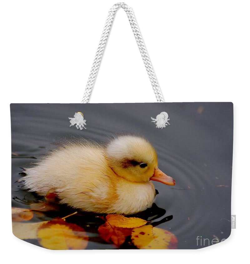 Bird Weekender Tote Bag featuring the photograph Autumn Baby by Jacky Gerritsen