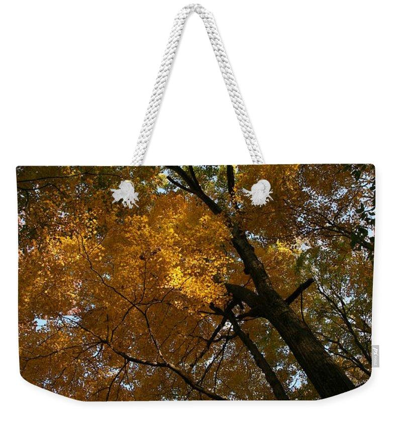 Autumn Fall Trees Orange Landscape Photography Photograph Digital Art Weekender Tote Bag featuring the photograph Autumn Canopy by Shari Jardina