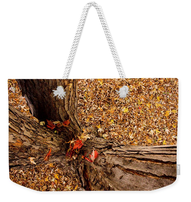 Maple Tree Weekender Tote Bag featuring the photograph Autumn Fall by James BO Insogna
