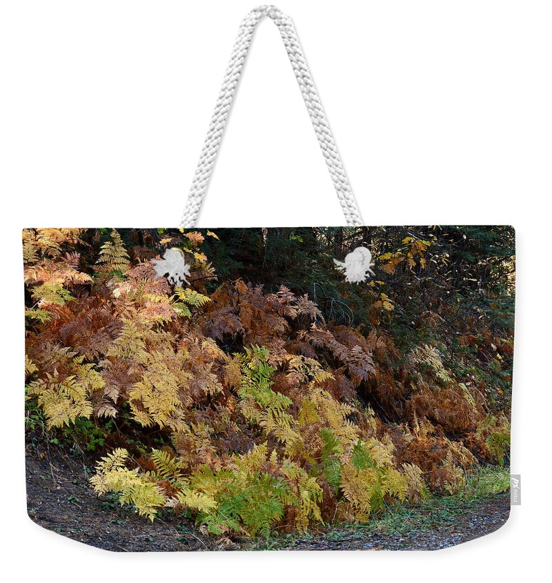 Fern Weekender Tote Bag featuring the photograph Autumn Ferns by Michael Allred