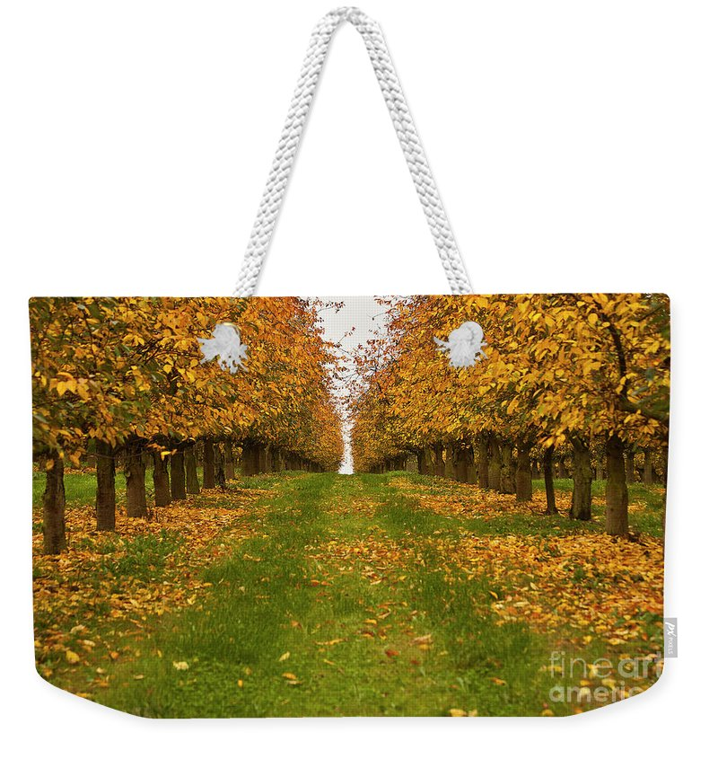 Tree Weekender Tote Bag featuring the photograph Autumn Foliage by Heiko Koehrer-Wagner
