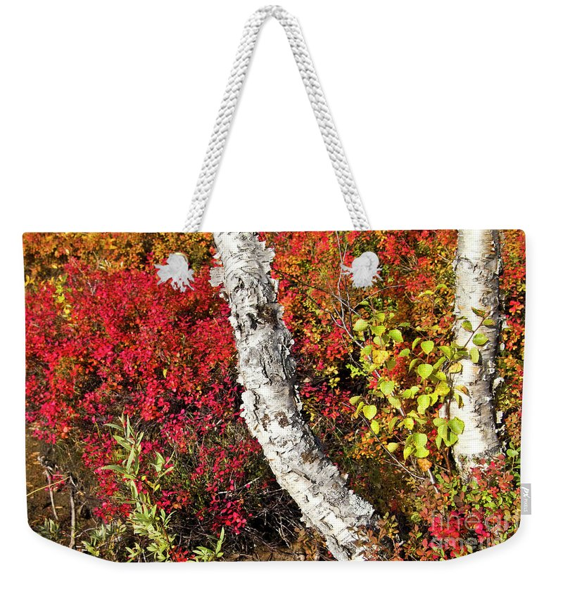 Tree Weekender Tote Bag featuring the photograph Autumn Foliage In Finland by Heiko Koehrer-Wagner