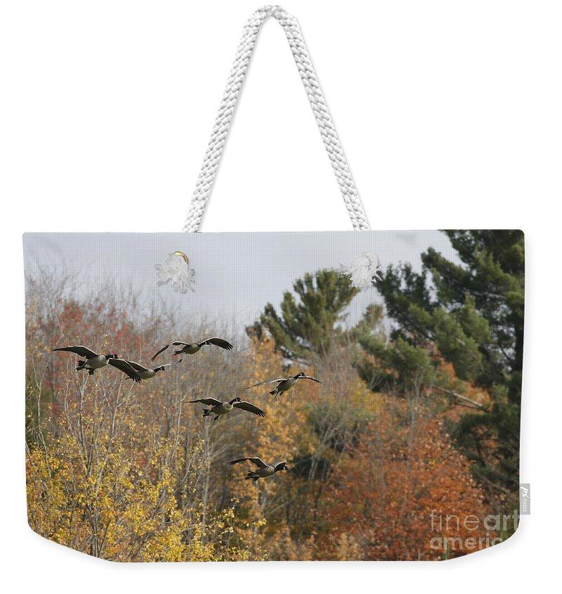 Geese Weekender Tote Bag featuring the photograph Autumn Geese by Deborah Benoit