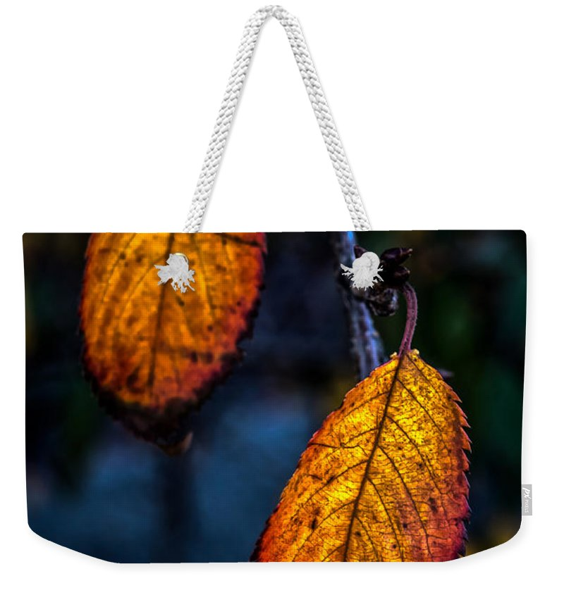 Leaf Weekender Tote Bag featuring the photograph Autumn Gradation by James Aiken