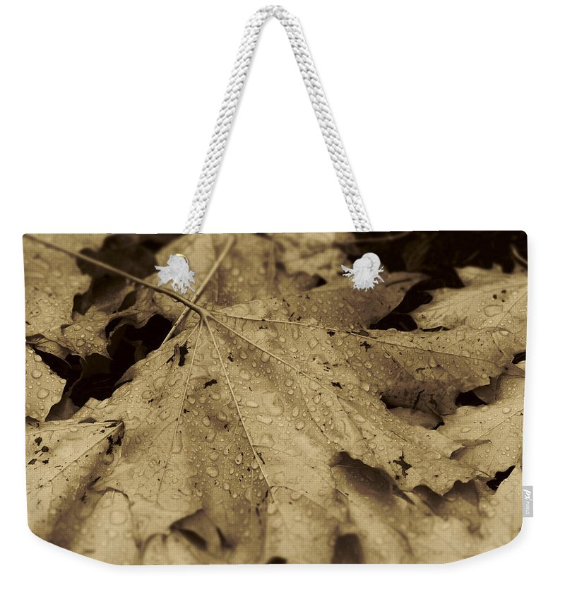 Leaves Weekender Tote Bag featuring the photograph Autumn In Sepia by Scott Ballingall