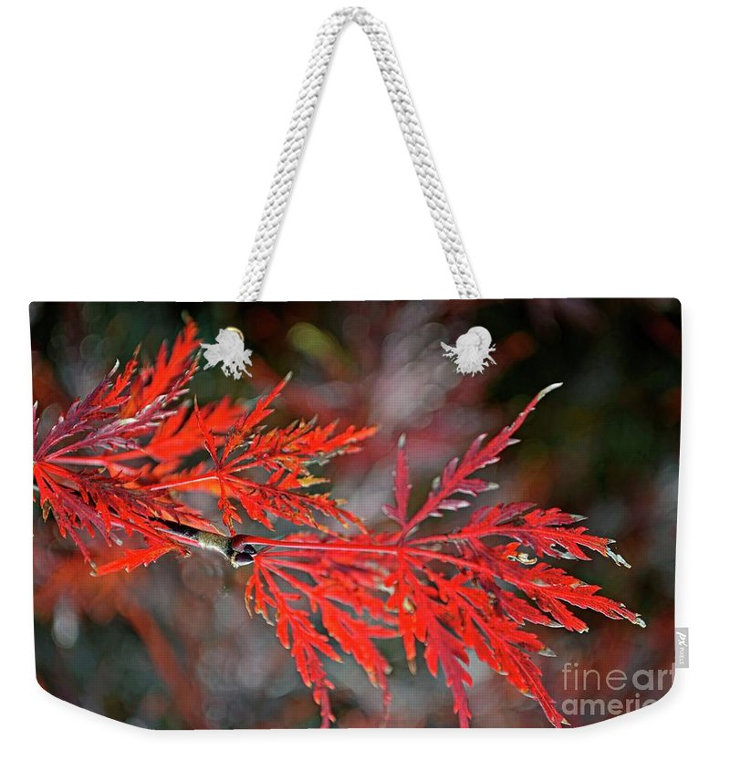 Tree Weekender Tote Bag featuring the photograph Autumn Japanese Maple by Debbie Portwood
