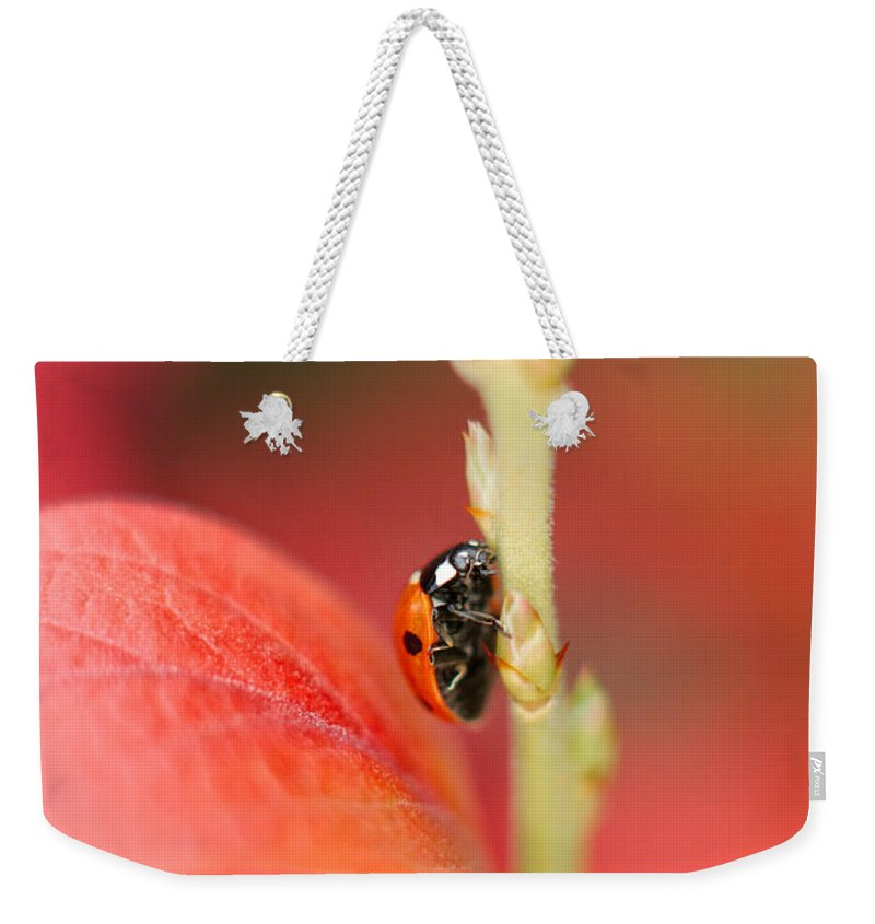 Coccinellidae Weekender Tote Bag featuring the photograph Autumn Ladybird by Mickey At Rawshutterbug