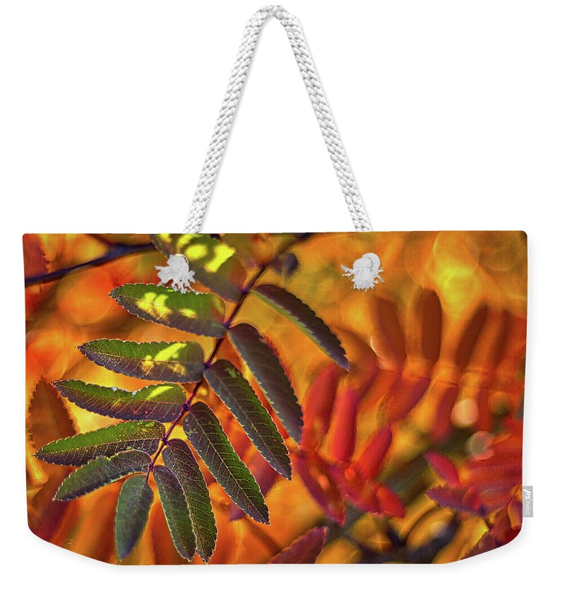 Sorbus Weekender Tote Bag featuring the photograph Autumn Leaves - Patagonia by Stuart Litoff