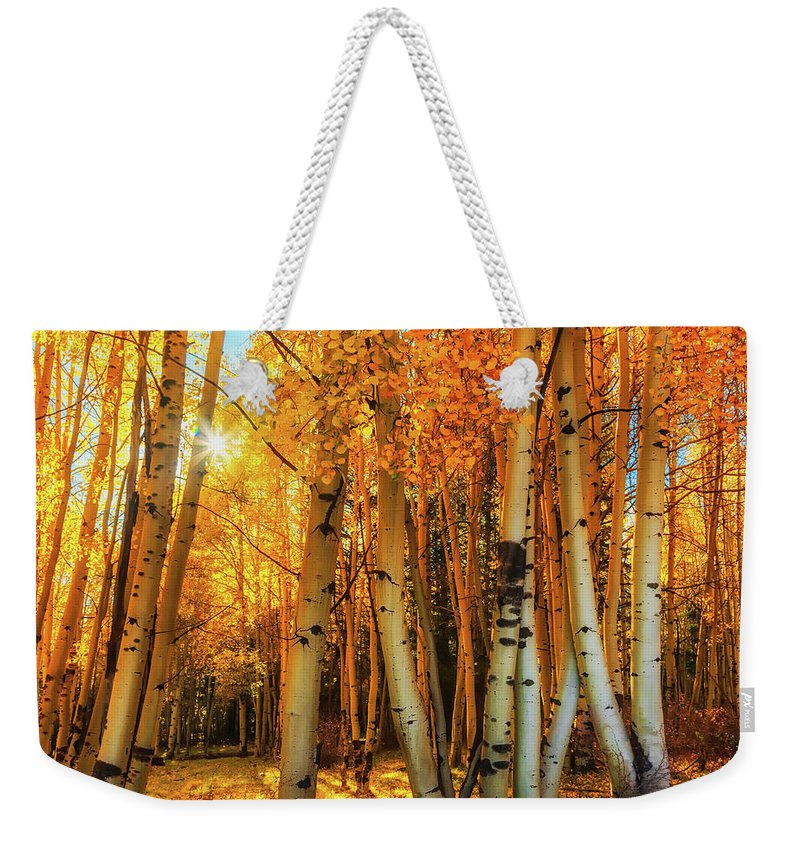 Afternoon Weekender Tote Bag featuring the photograph Autumn Light by Rick Furmanek