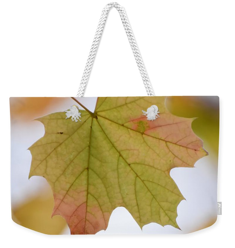 Maple Weekender Tote Bag featuring the photograph Autumn Maple Leaf Vertical by Rowena Throckmorton
