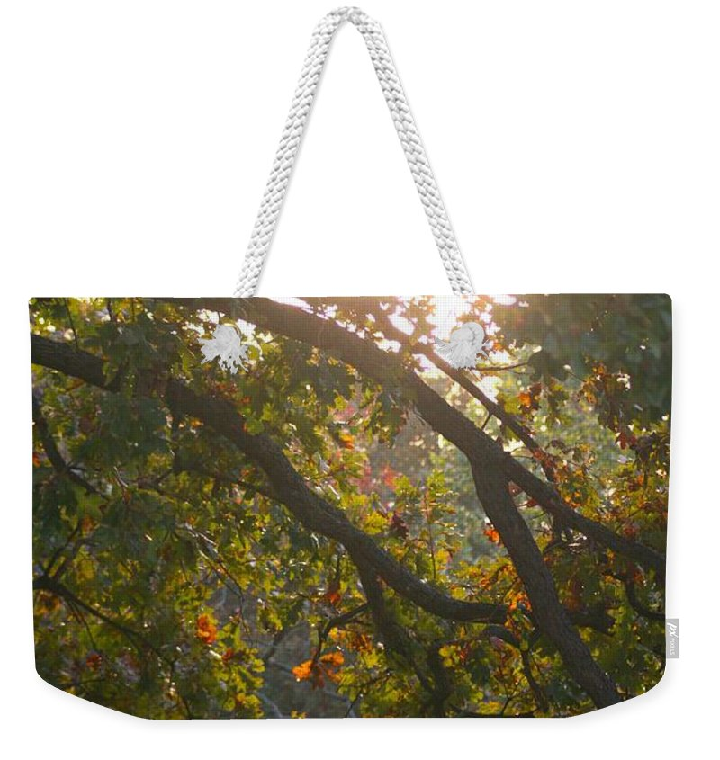 Autumn Weekender Tote Bag featuring the photograph Autumn Morning Glow by Nadine Rippelmeyer