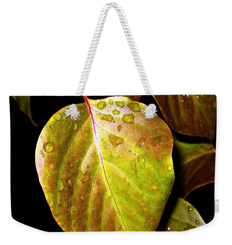 Autumn Weekender Tote Bag featuring the photograph Autumn Rain by Will Borden